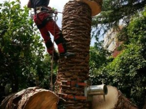 Abbattimento palma in Tree Climbing